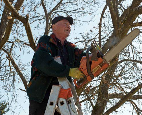 Mann auf Leiter mit Kettensäge